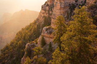 America, Southwest, Arizona, Colorado Plateau, Grand Canyon, National Park, Ponderosa Pine, South Rim, Southwest, Yaki Point