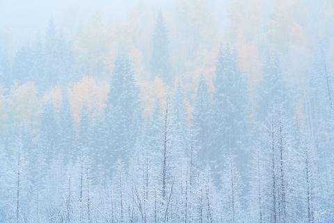 Aspen Trees, Autumn, CO, Colorado, Colorado Fall Color, Fall Color, Fall color in Colorado, Ridgway, Rocky Mountains, San Juan Mountains