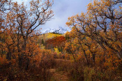 Autumn, CO, Colorado, Fall Color, Rocky Mountains, San Juan Mountains