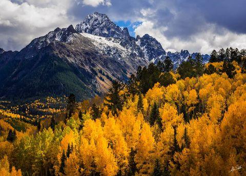 Aspen Trees, Aspens, Autumn, Colorado, Fall, Fall Color, Mount Sneffels, San Juan Mountains, Sneffels, Telluride