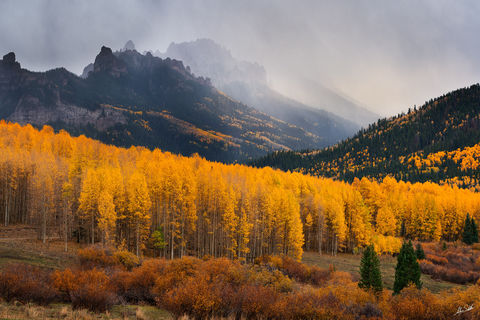 Aspen Trees, Aspens, Autumn, CO, Colorado, Fall, Fall Color, Owl Creek Pass, Ridgway, Rocky Mountains, San Juan Mountains, Silver Jack, Silver Jack Reservoir, Trees, Yellow
