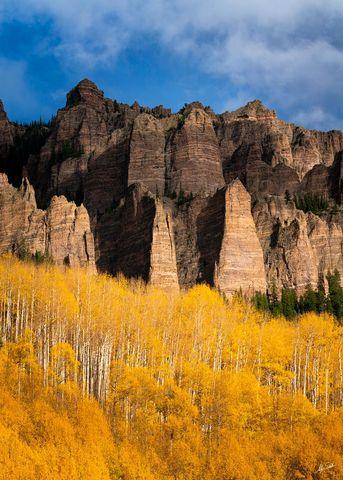 Aspen Trees, Aspens, Autumn, CO, Colorado, Colorado Fall Color, Fall, Fall Color, Fall color in Colorado, High Mesa, Pinnacles, Populus tremuloides, Rocky Mountains, San Juan Mountains, Silver Jack, S