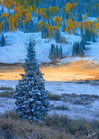 Aspen Trees, Autumn, CO, Cold, Colorado, Crested Butte, Fall, Fall Color, Fog, Kebler Pass, Snow, Winter