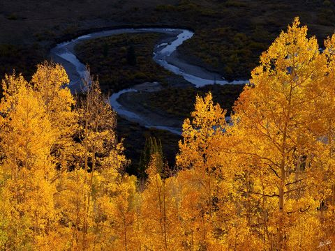 Aspens, Autumn, CO, Colorado, Crested Butte, East River, Fall, Tree, Trees, Yellow