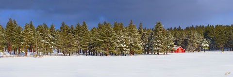 AZ, Arizona, Barn, Flagstaff, Forest, Northern Arizona, Pine, Pine Tree, Ponderosa, Ponderosa Pine, Ranch, Red, Red Barn, Snow, Trees, Winter, Wooded, Woods