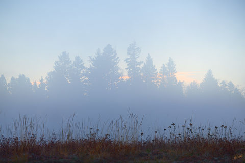 Blue Hour, Brazos, Carson National Forest, Chama, Fog, Forest, Morning, NM, New Mexico