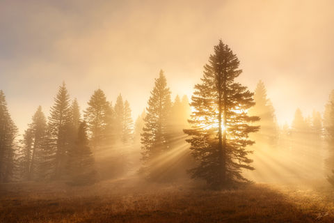 Brazos, Chama, Fog, Forest, NM, New Mexico, Sunlight, Sunrise, Carson, National Forest