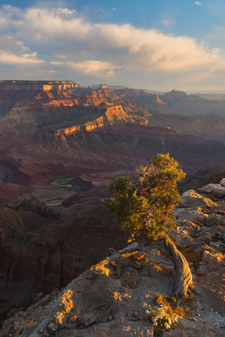 AZ, Arizona, Colorado River, Grand Canyon, Lipan Point, National Park, South Rim, Tree, Unkar Delta
