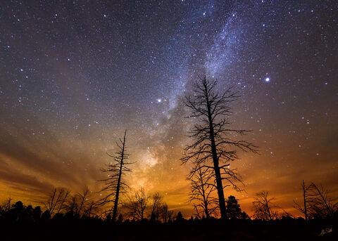 AZ, Arizona, Grand Canyon, Milky Way, National Park, Night Sky, South Rim, Stars, Trees