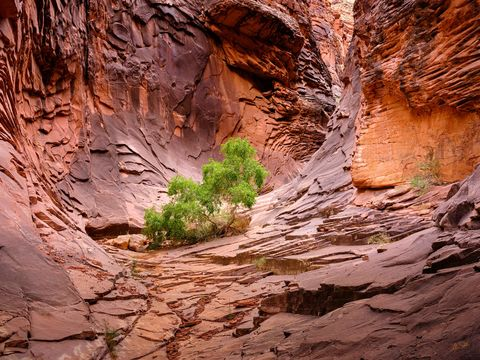 Below the Rim, Expedition, FujiFilm, GFX, GFX 100, Grand Canyon, National Park, North Canyon, River Trip, Tree