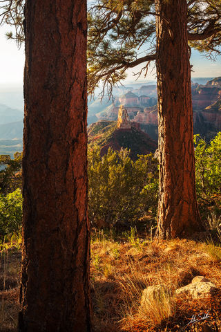AZ, America, Southwest, Arizona, Colorado Plateau, Grand Canyon, Mount Hayden, National Park, North Rim, Point, Imperial, Ponderosa, tree