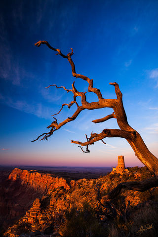 Artist-in-Residence, Desert View, Grand Canyon, National Park, South Rim, Tree, Watchtower