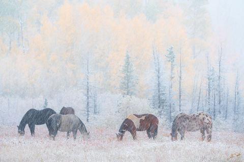 Autumn, CO, CR7, Colorado, Colorado Fall Color, County Road 7, Dallas Divide, Fall Color, Fall color in Colorado, Graze, Grazing, Horse, Horses, Horses in the snow, Ridgway, Rocky Mountains, San Juan