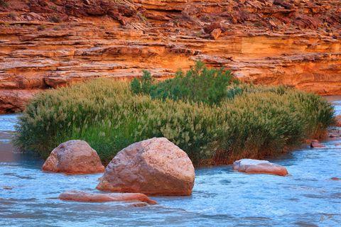 Colorado River, Grand Canyon, Little Colorado, River, Turquoise, The Confluence