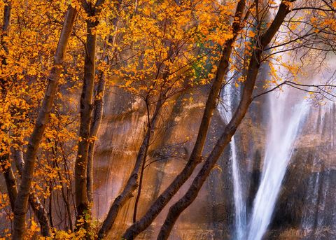 Autumn, Fall, Fall Color, Fall Color in Utah, grand staircase, grand staircase-escalante, Lower Calf Creek Falls, National Monument, UT, Utah