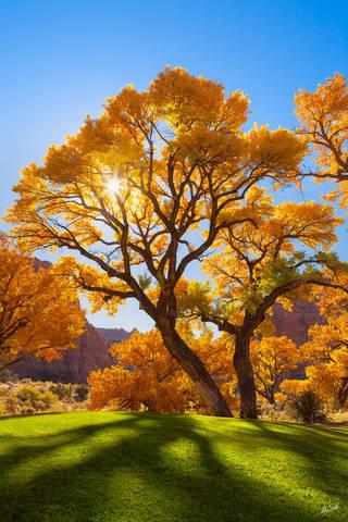 Autumn, Cottonwood, Fall Color, Green, Happy, Kane Springs, Moab, Peaceful, Sun, Tree, UT, Utah, Yellow