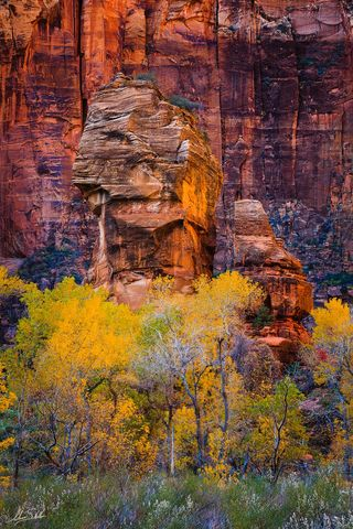 Autumn, Fall, Fall Color, National Park, Temple of Sinawava, The Pulpit, UT, Utah, Zion, Zion National Park