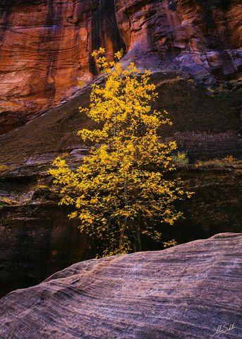 Autumn, Fall, Fall Color, National Park, Virgin River Narrows, Zion, Zion National Park, narrows