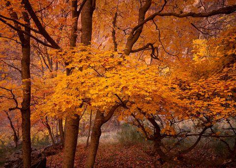 Autumn's Web in Zion