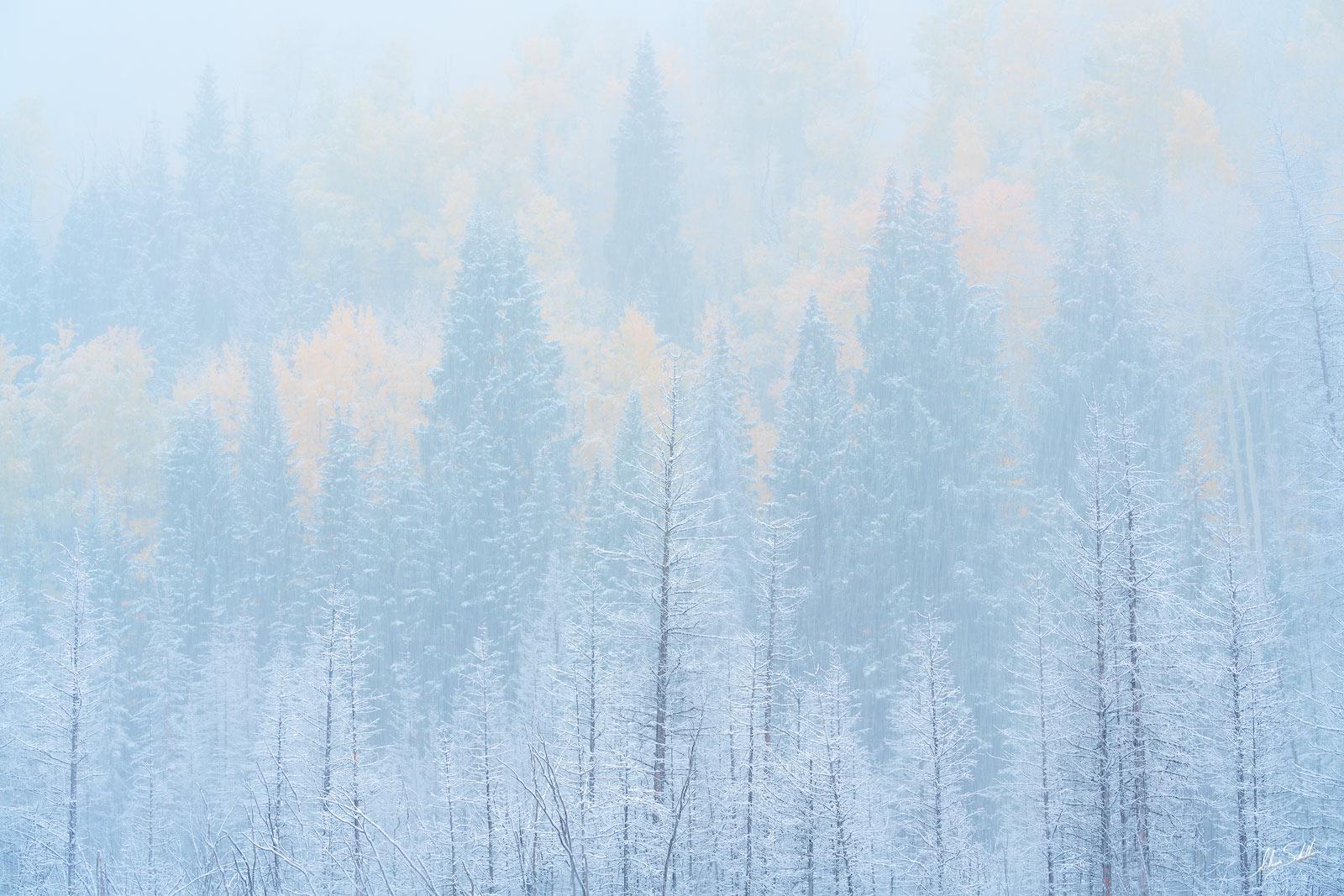 Aspen Trees, Autumn, CO, Colorado, Colorado Fall Color, Fall Color, Fall color in Colorado, Ridgway, Rocky Mountains, San Juan Mountains, photo