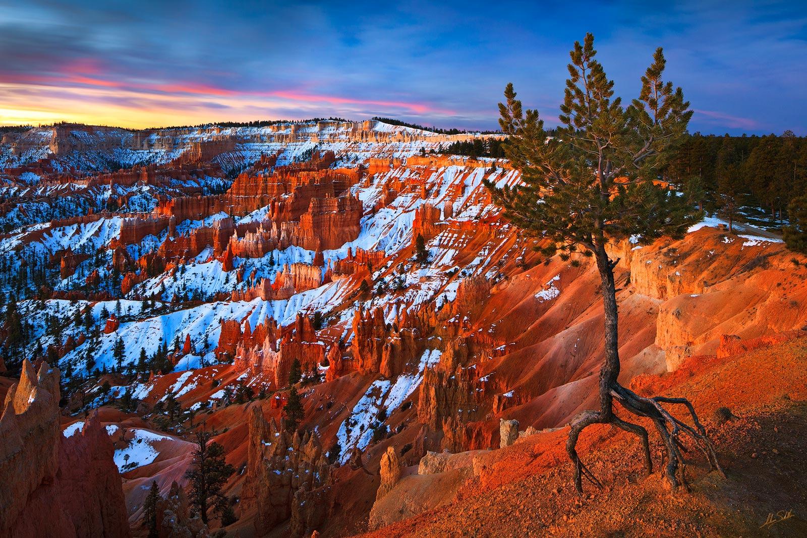 BRCA, Bryce Canyon, Hoodoos, National Park, Sandstone, Sunrise Point, Tree, USA, UT, Utah, geology, photo