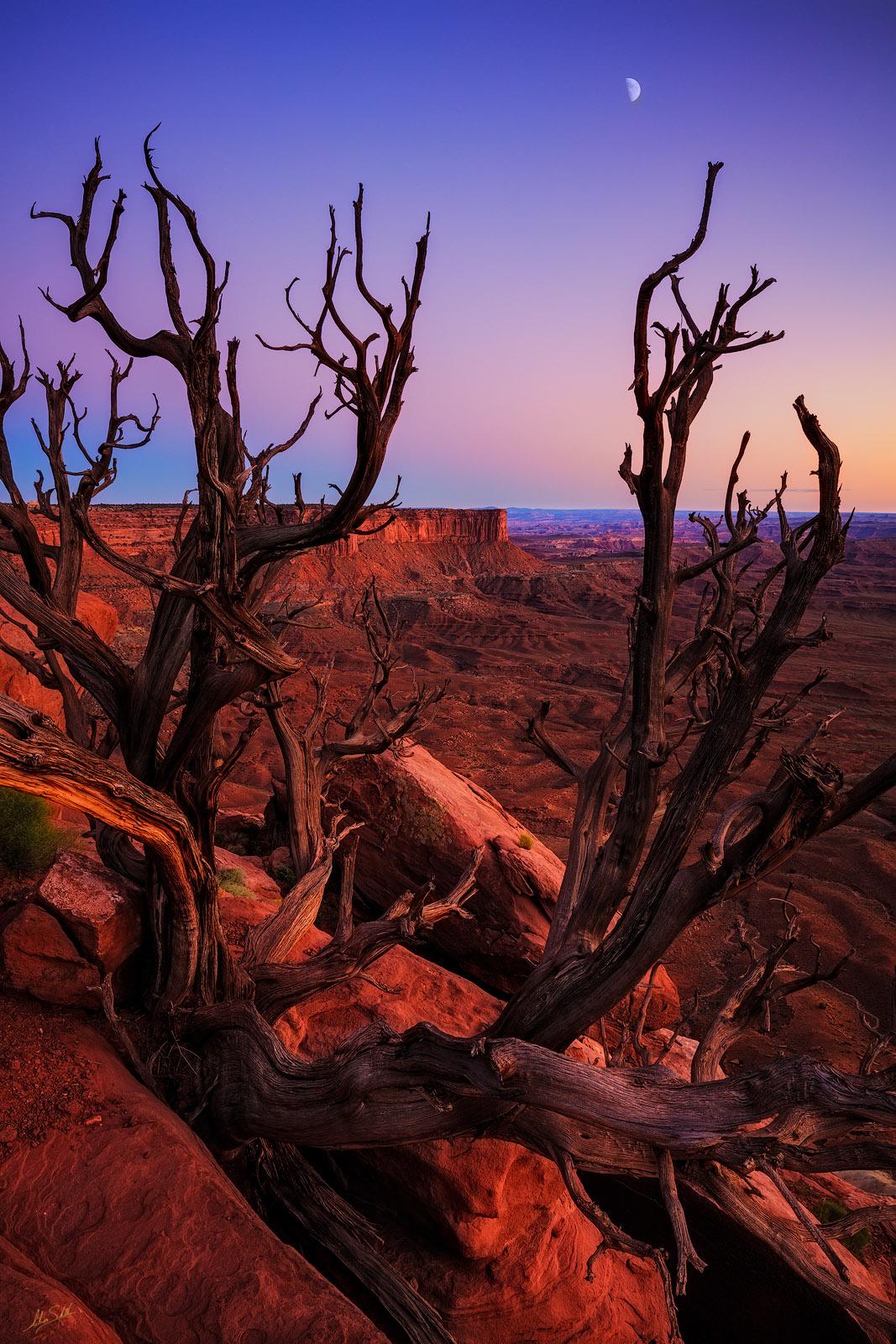 Canyonlands, Canyonlands National Park, Desert, Green River Overlook, Island in the Sky, Moab, Moon, UT, Utah, photo