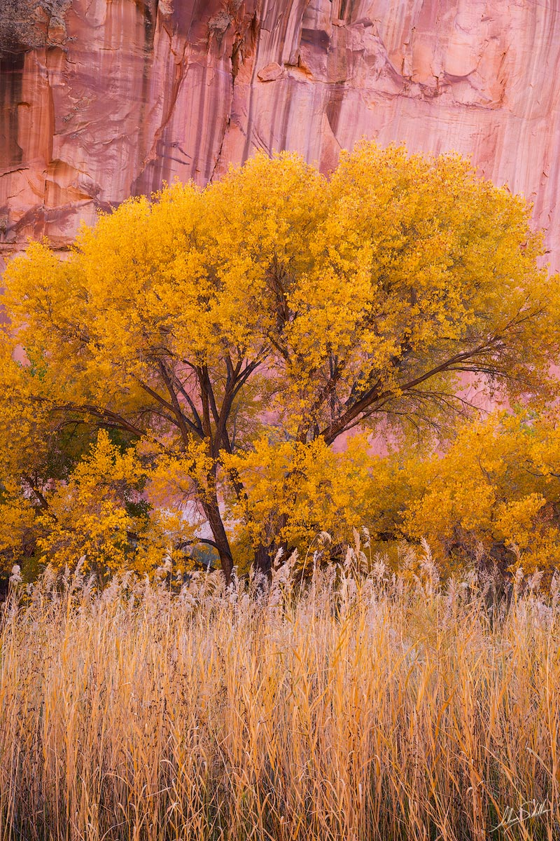Fall color in canyon country. From Capitol Reef National Park in Utah. Photo © Adam Schallau, All Rights Reserved.