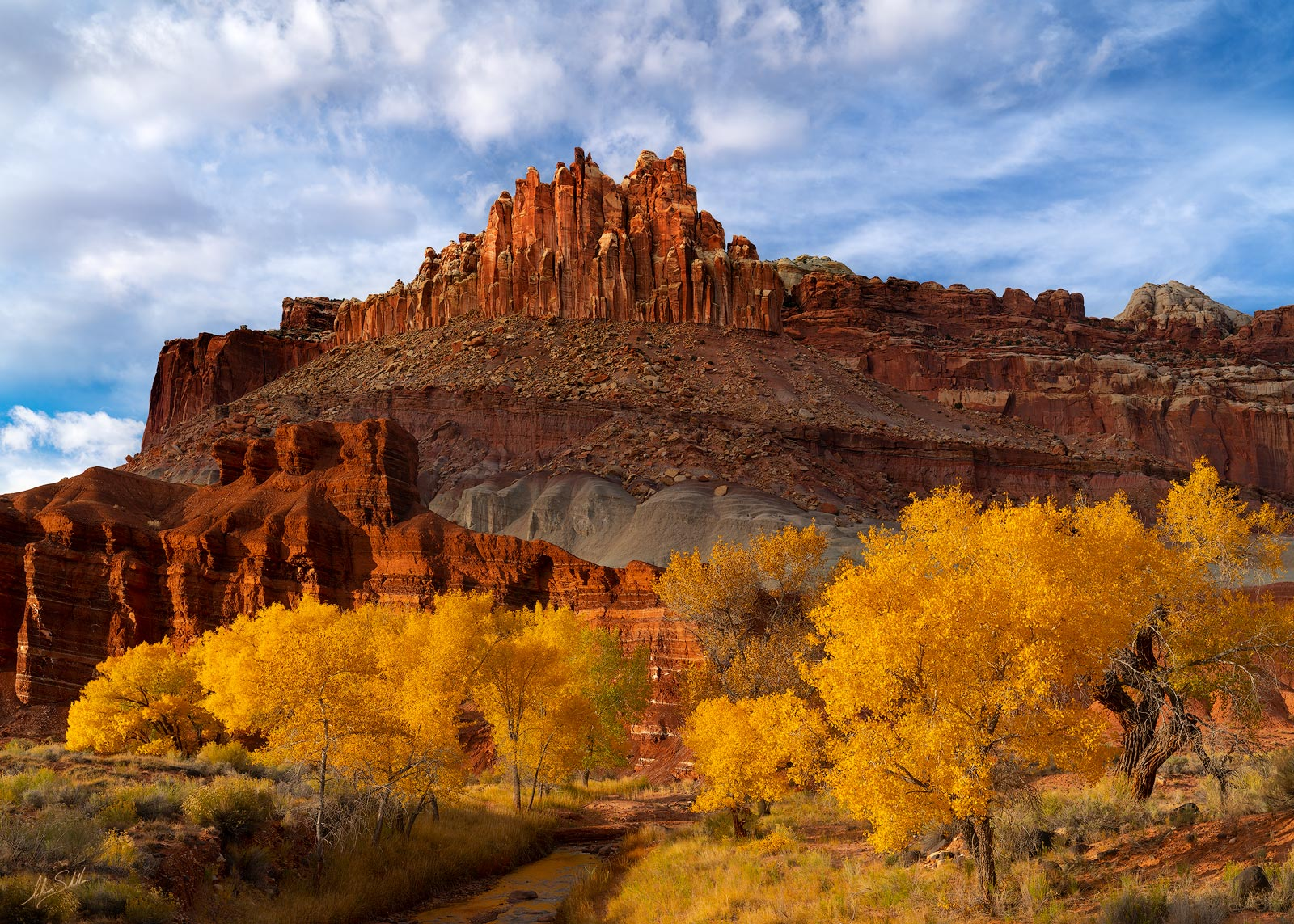 The cottonwood trees in Capitol Reef National Park in Utah turn a golden yellow in fall. High above is the rock formation known...