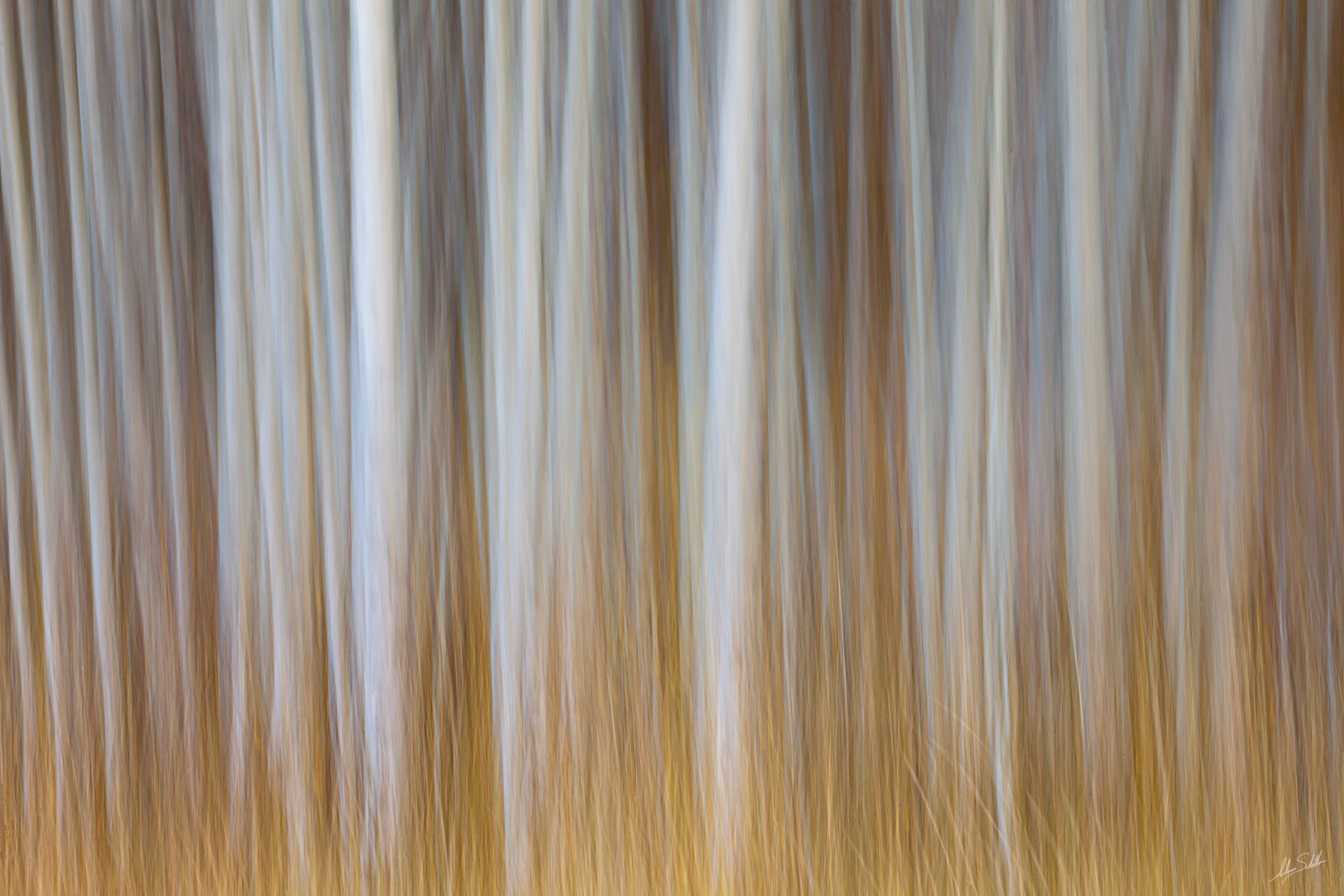An impressionistic interpretation of autumn color in the aspen forests along Kebler Pass near Crested Butte, Colorado. This photo...