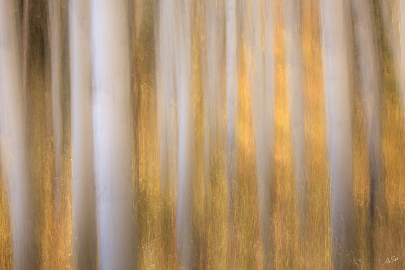 Abstract, Art, Autumn, Blur, CO, Colorado, Fall, Fall Color, ICM, Impressionistic, In Camera Motion, photo