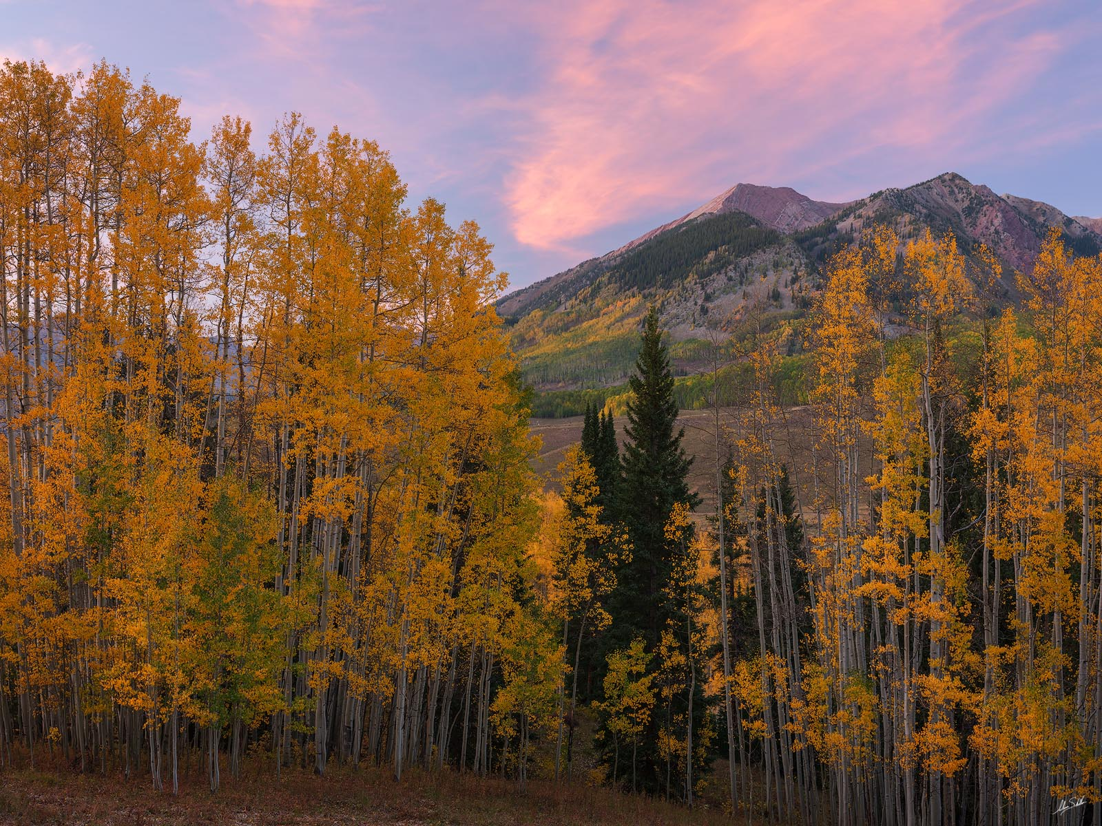 Autumn, Avery Peak, CO, Colorado, Crested Butte, Fall, Fall Color, Gothic, Trees, photo