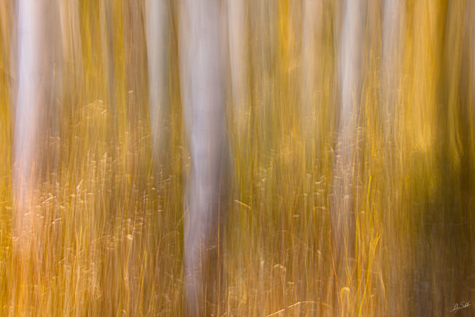 Abstract, Art, Aspen Trees, Aspens, Autumn, Blur, CO, Colorado, Fall, Fall Color, Forest, ICM, Impressionistic, In Camera Motion, Kebler Pass, Tree, grass, grasses, photo