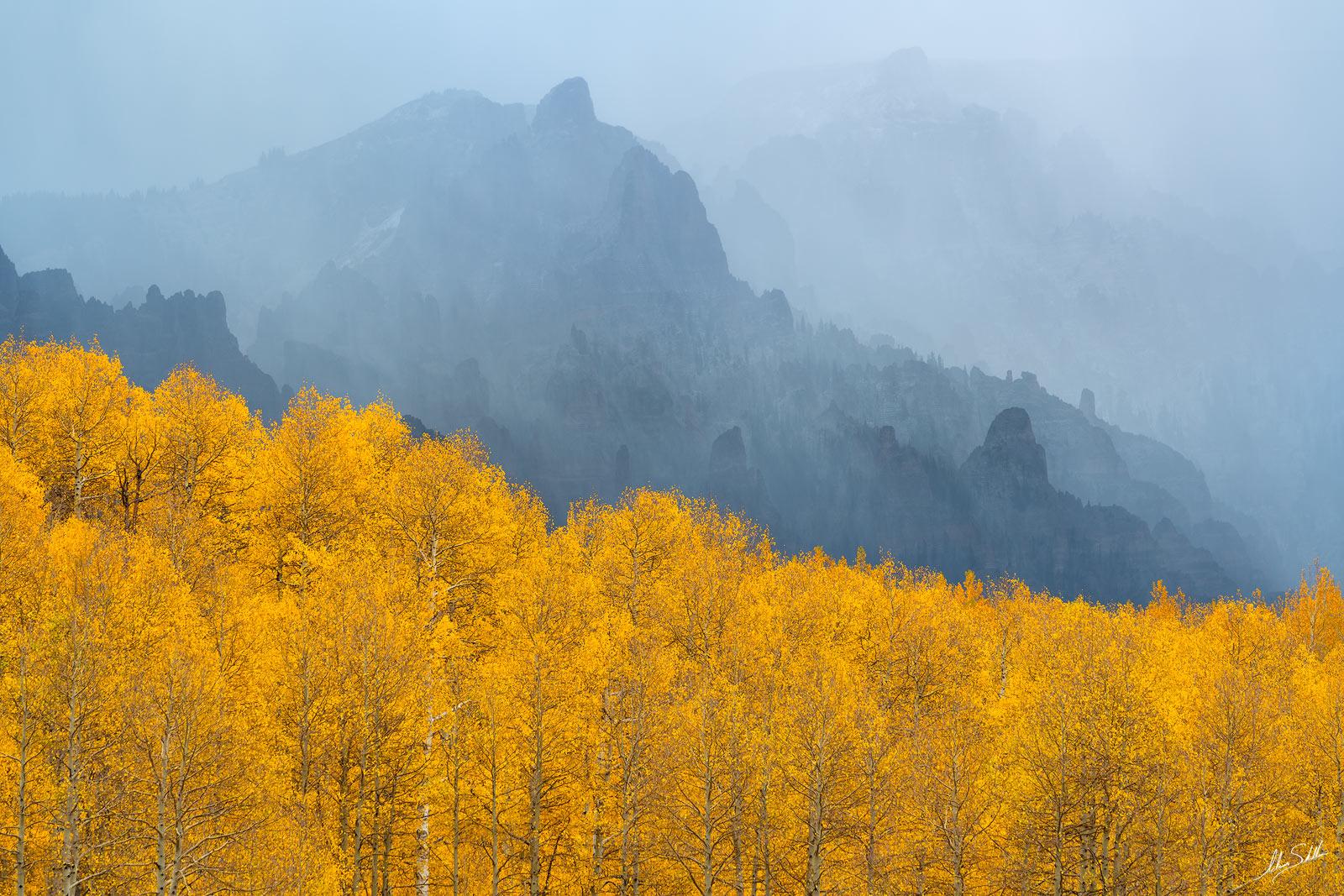 Aspen Trees, Aspens, Autumn, CO, Colorado, Colorado Fall Color, Fall, Fall Color, Fall color in Colorado, Foreboding, Populus tremuloides, Rocky Mountains, San Juan Mountains, Sheep Mountain, Storm, photo