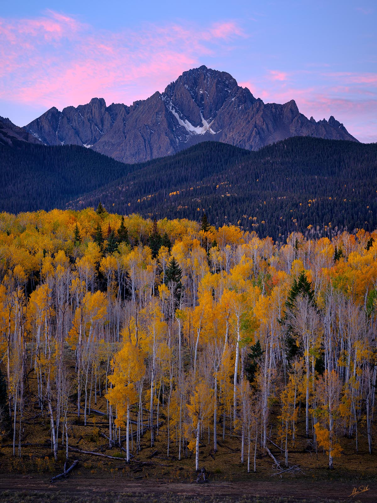 Mount Sneffels rises high above a stand of aspen trees with golden leaves as the distant sky is painted by early morning light...
