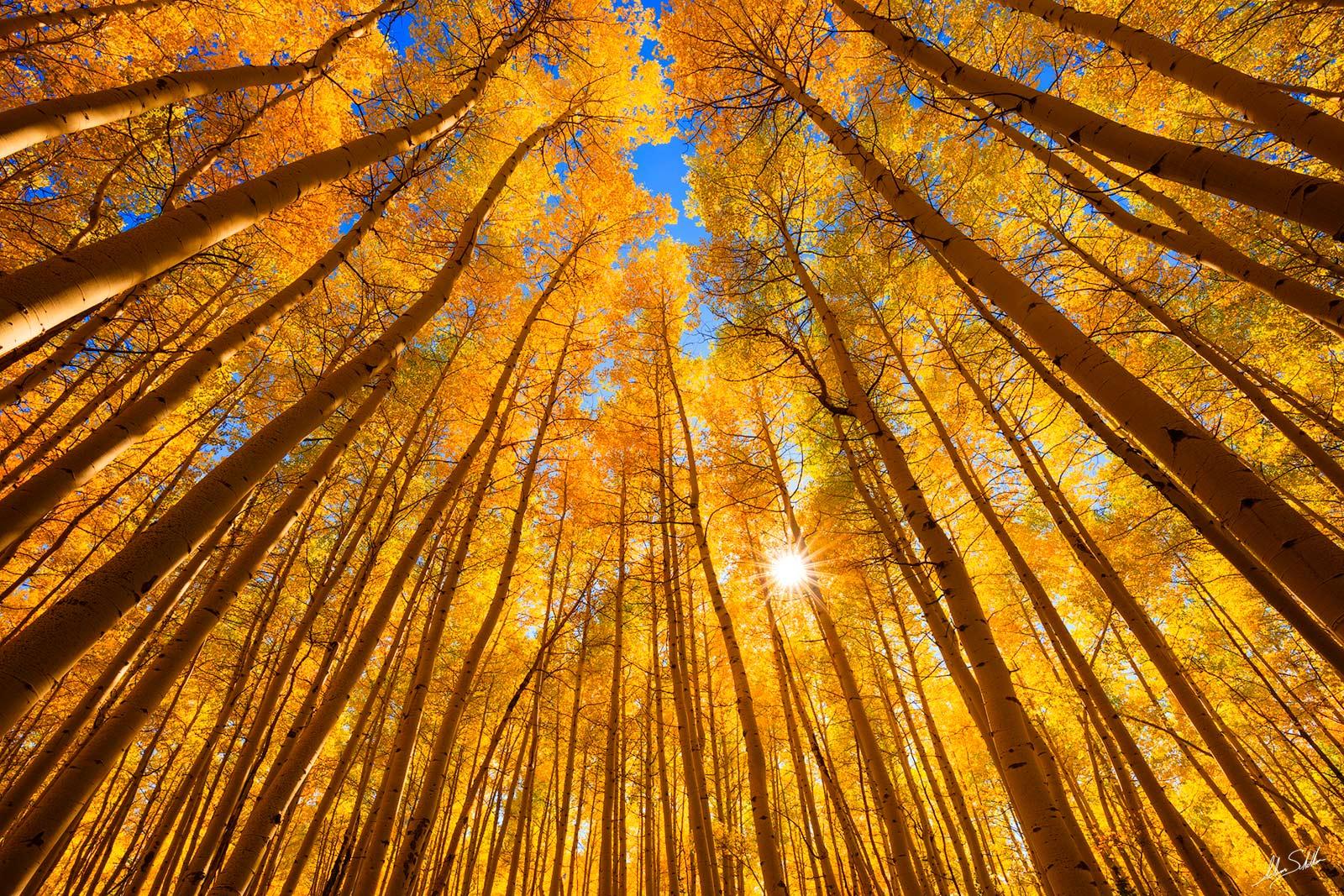 Aspens, Autumn, CO, Colorado, Fall Color, Rocky Mountains, San Juan Mountains, Trees, photo