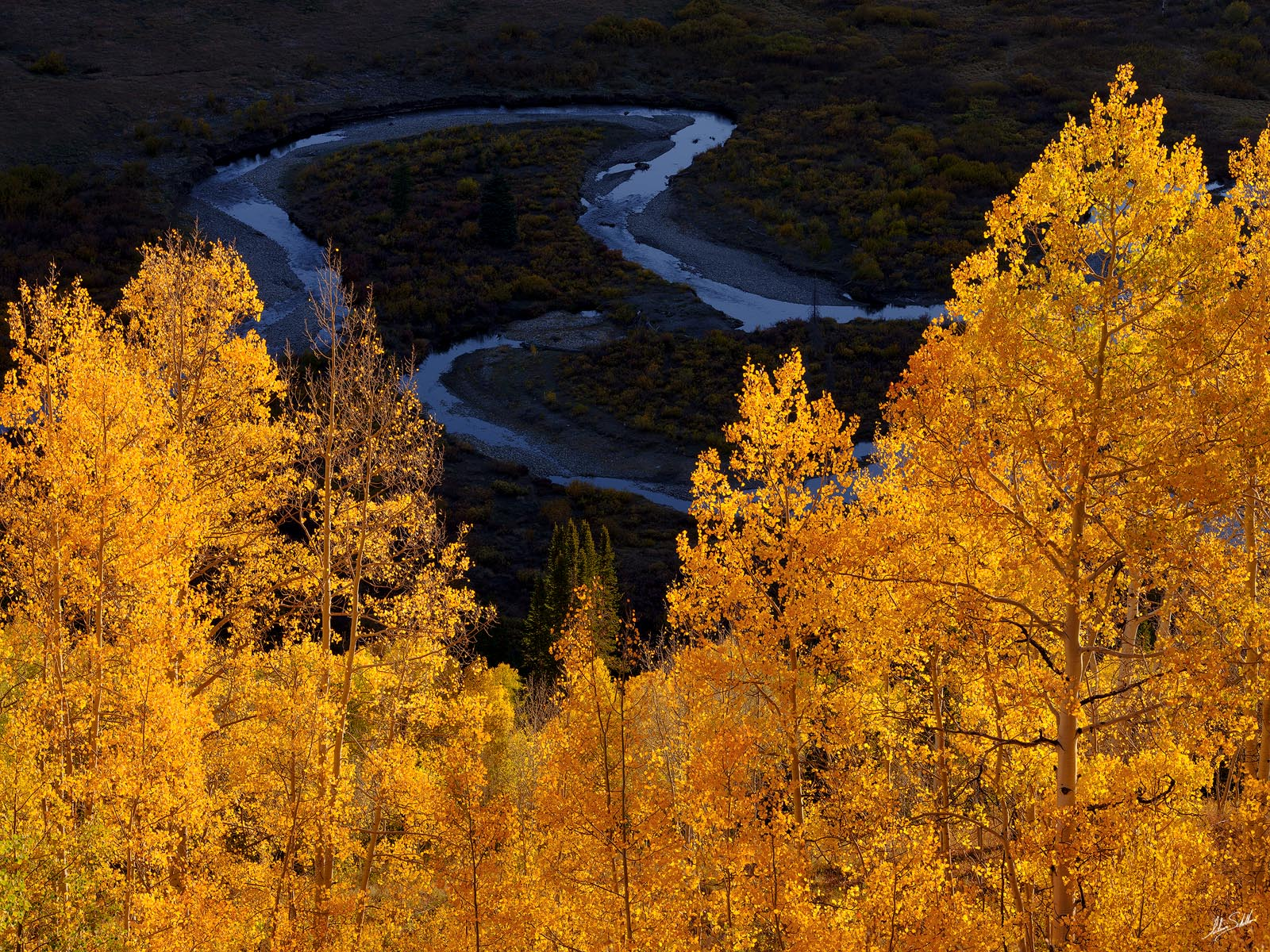 Aspens, Autumn, CO, Colorado, Crested Butte, East River, Fall, Tree, Trees, Yellow, photo