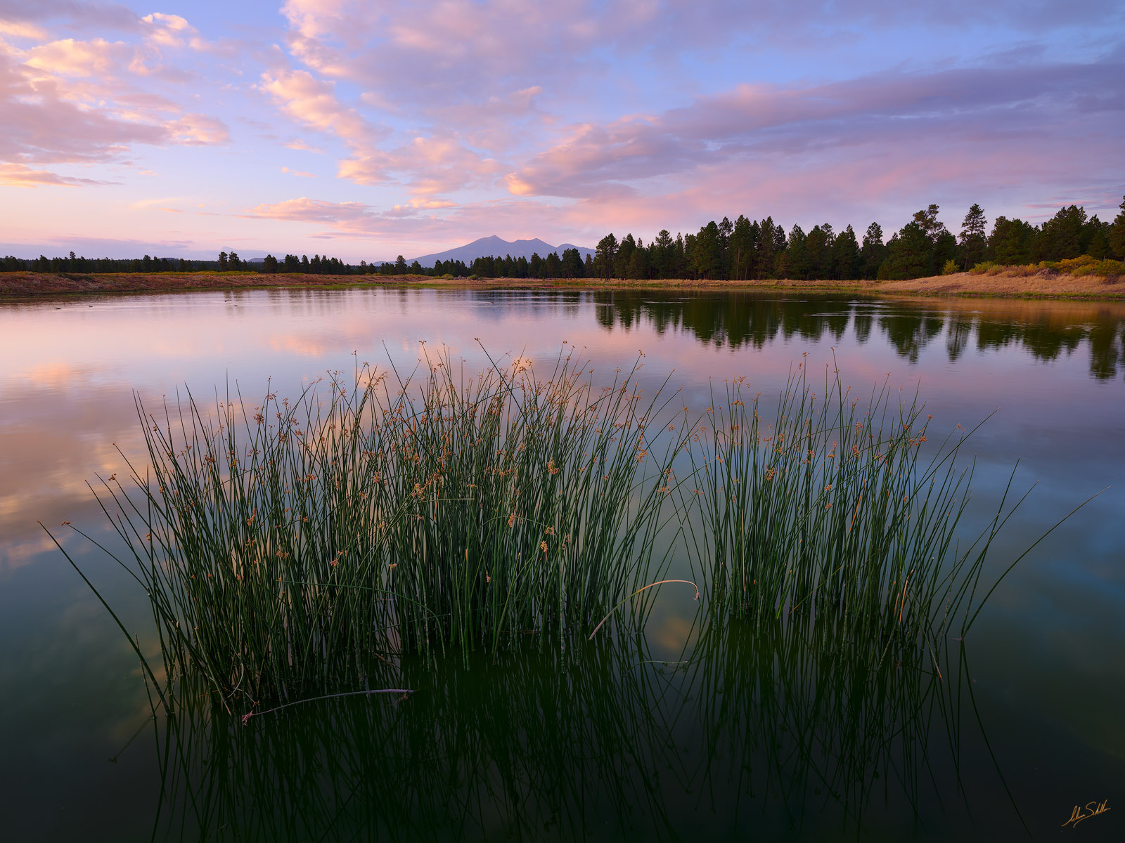 The view of the San Francisco Peaks from the Kachina Village wetlands near Flagstaff, Arizona. © Adam Schallau, All Rights Reserved...