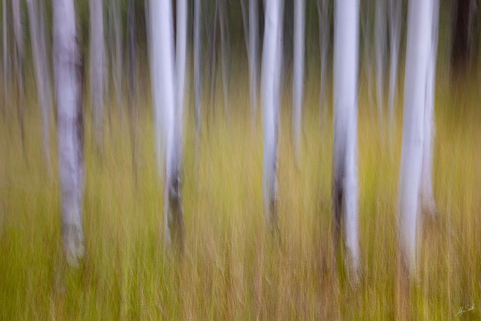 An impressionistic view of the aspen trees and summer grasses in Hart Prairie near Flagstaff, Arizona. I created this photo in...