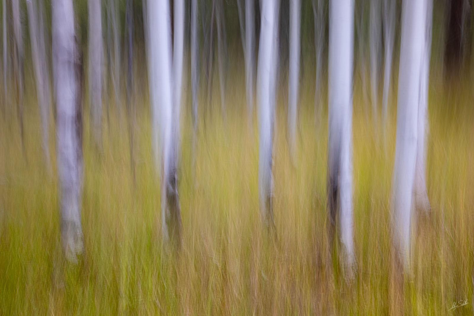 AZ, Abstract, Arizona, Art, Blur, Coconino National Forest, Flagstaff, Hart Prairie, ICM, Impressionistic, In Camera Motion, photo