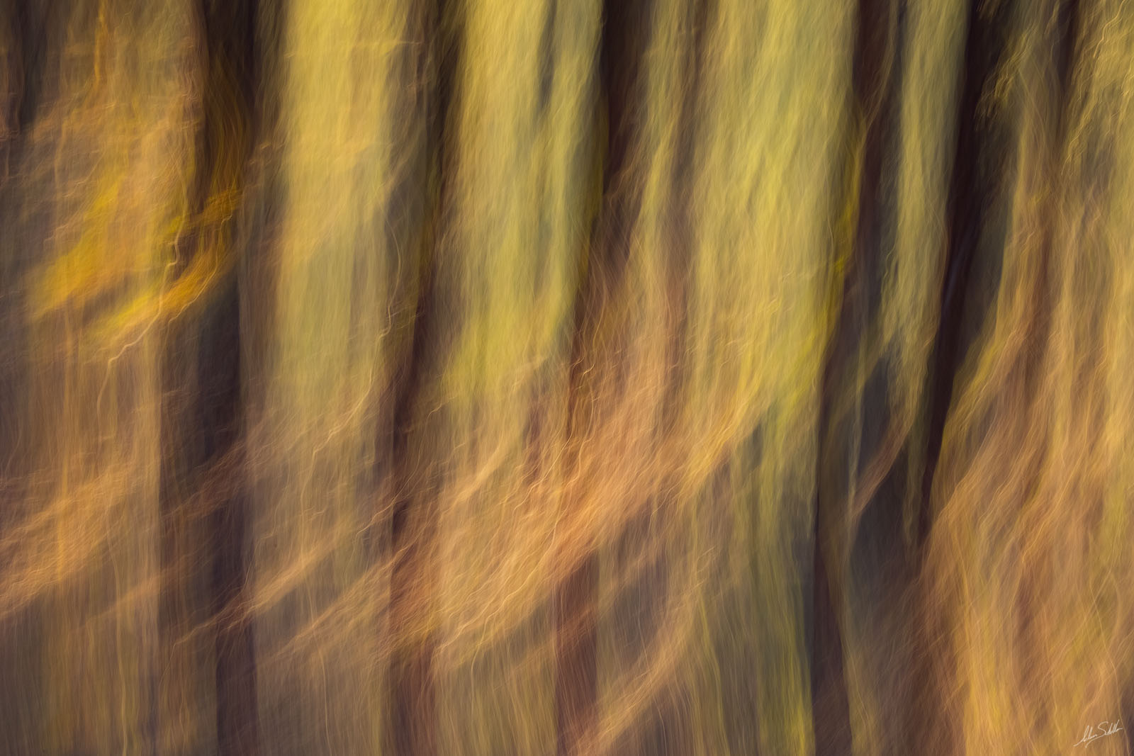 An impressionistic view of the Ponderosa pine trees near Flagstaff, Arizona. I created this photo in a single exposure by using...