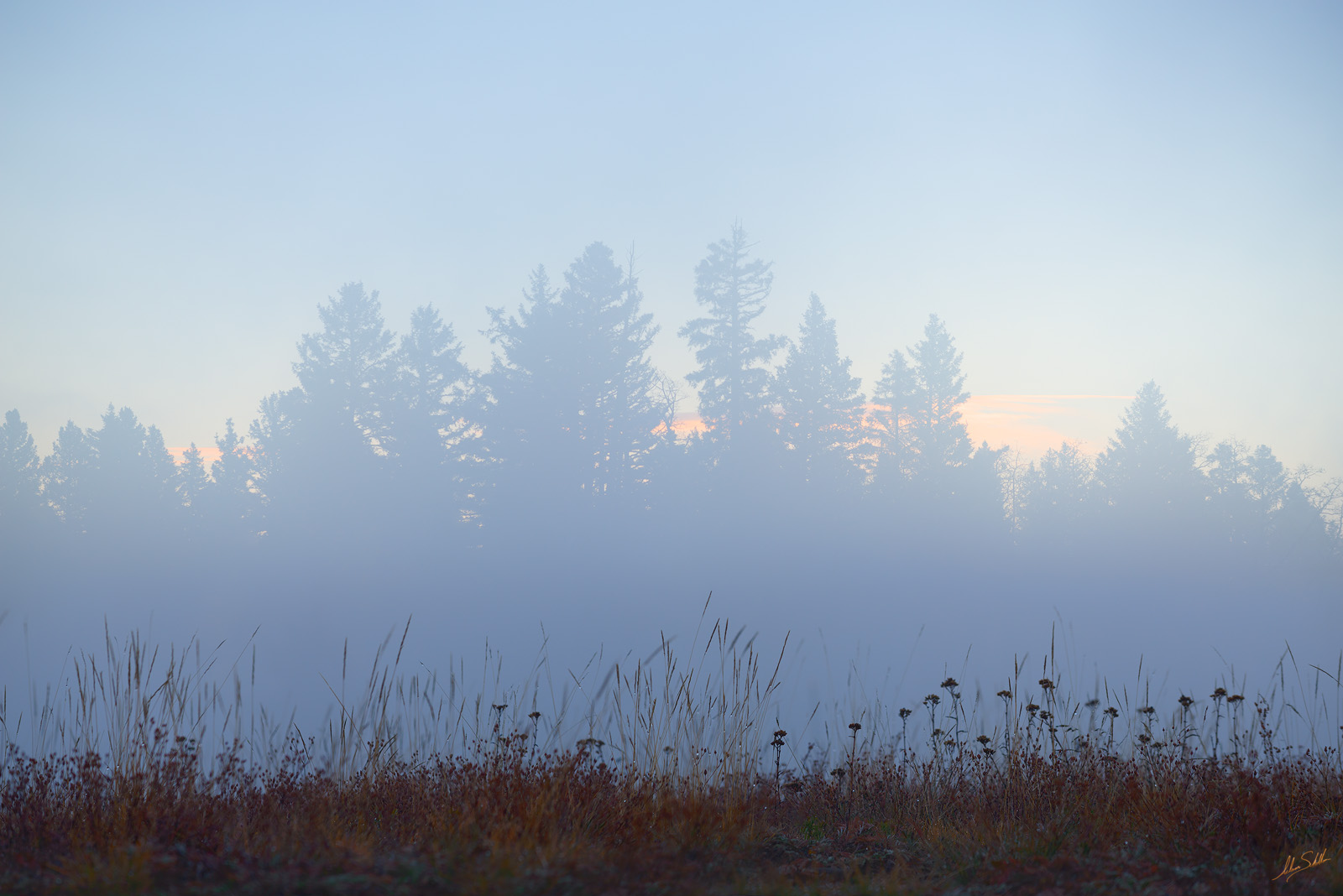 Blue Hour, Brazos, Carson National Forest, Chama, Fog, Forest, Morning, NM, New Mexico, photo
