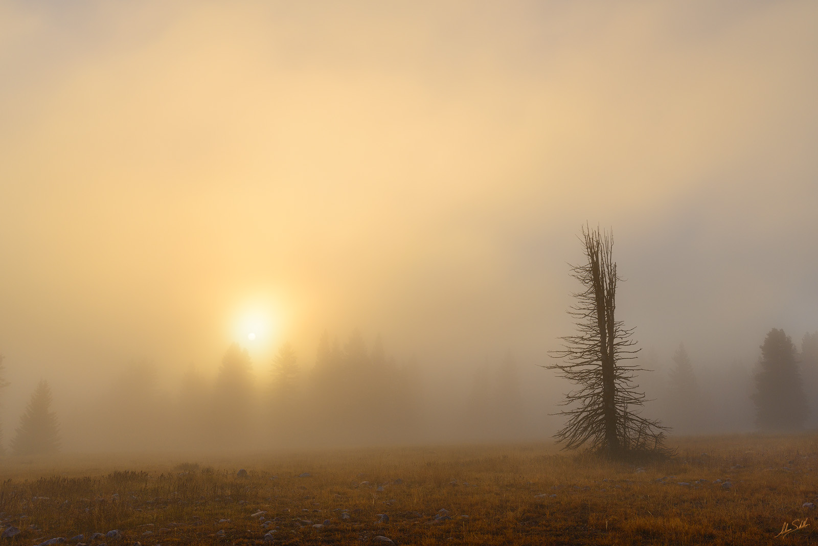 Carson, National Forest, Clouds, Fog, Forest, NM, New Mexico, Sunrise, Trees, photo