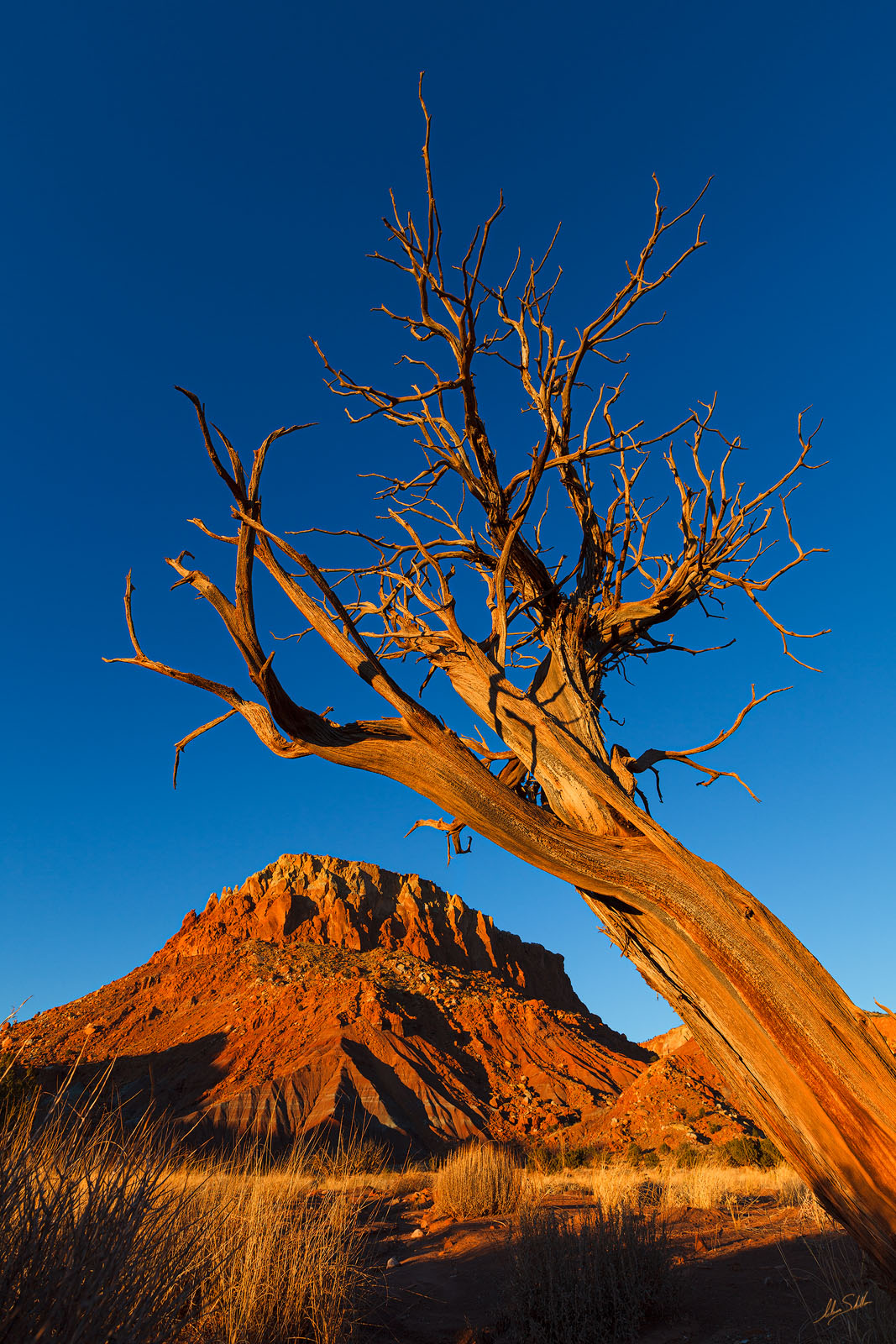 Abiquiu, Blue, Georgia OKeeffe, Ghost Ranch, NM, New Mexico, okeeffe, Sky, Tree, photo