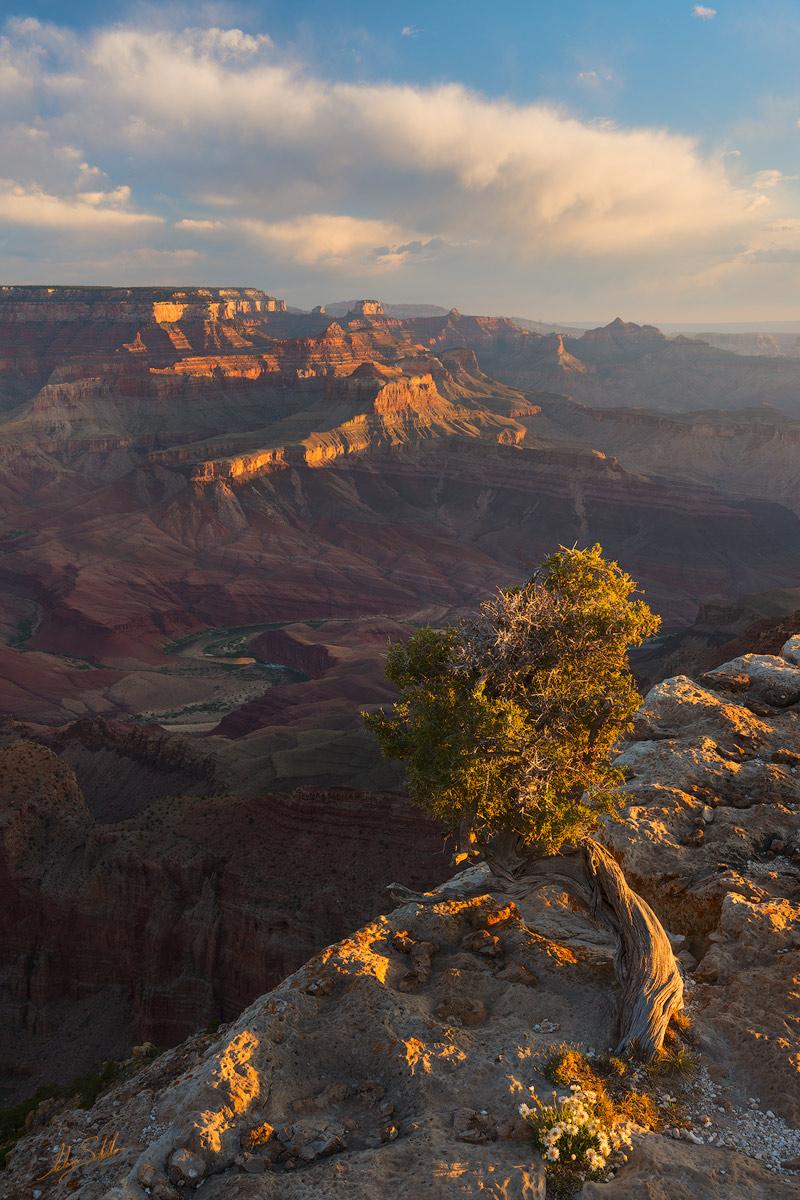 AZ, Arizona, Colorado River, Grand Canyon, Lipan Point, National Park, South Rim, Tree, Unkar Delta, photo