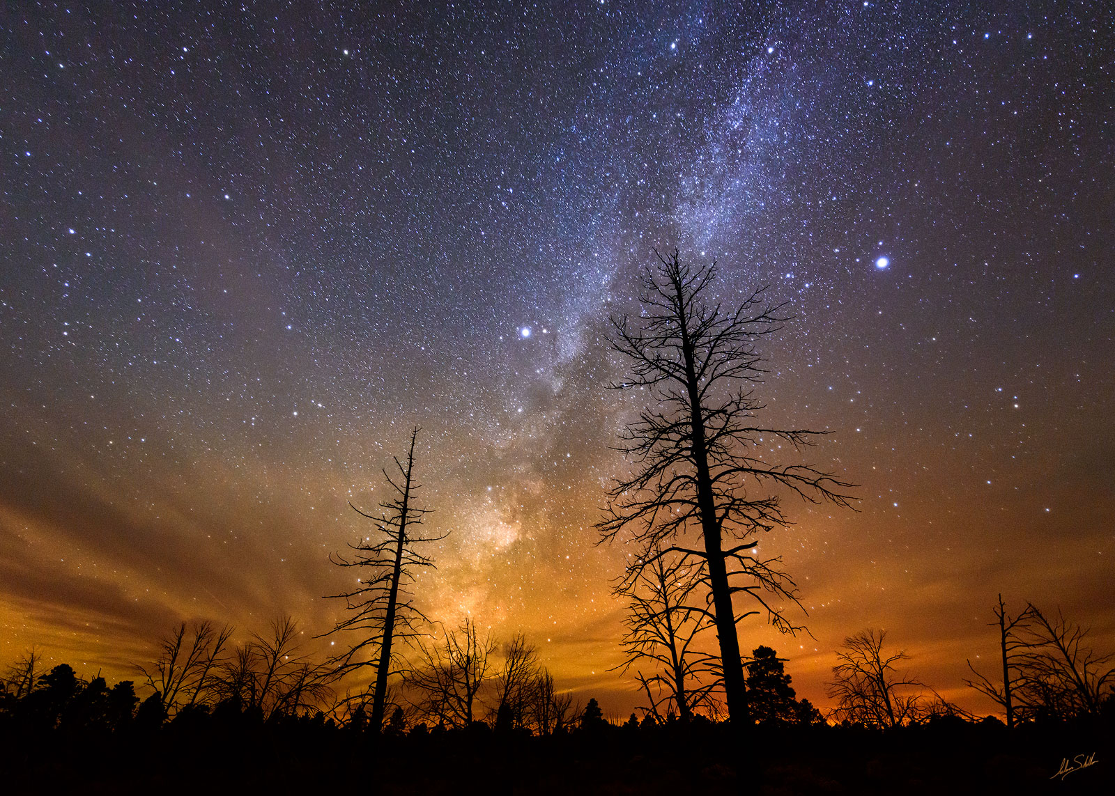 A pair of Ponderosa pine trees stand in silhouette against the Milky Way as it arcs across the night sky over the forests on...