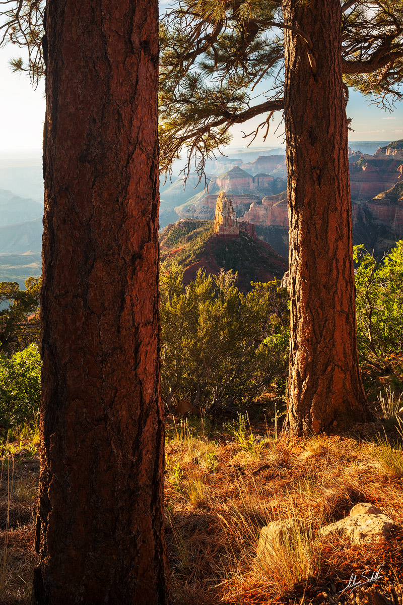 Looking through a pair of ponderosa pine trees to Mount Hayden. From Point Imperial on the North Rim. Photo © Adam Schallau...