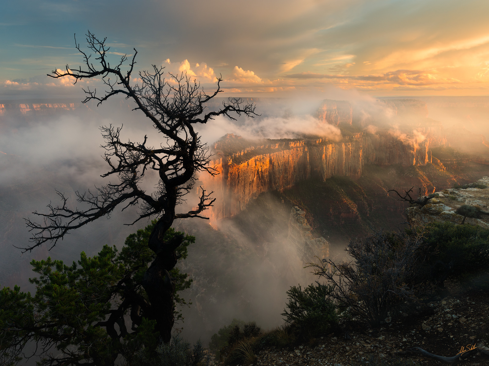 Grand Canyon, Cape Royal, Mist, North Rim, Wotans Throne, Monsoon, Storms, Tree, Clouds, photo