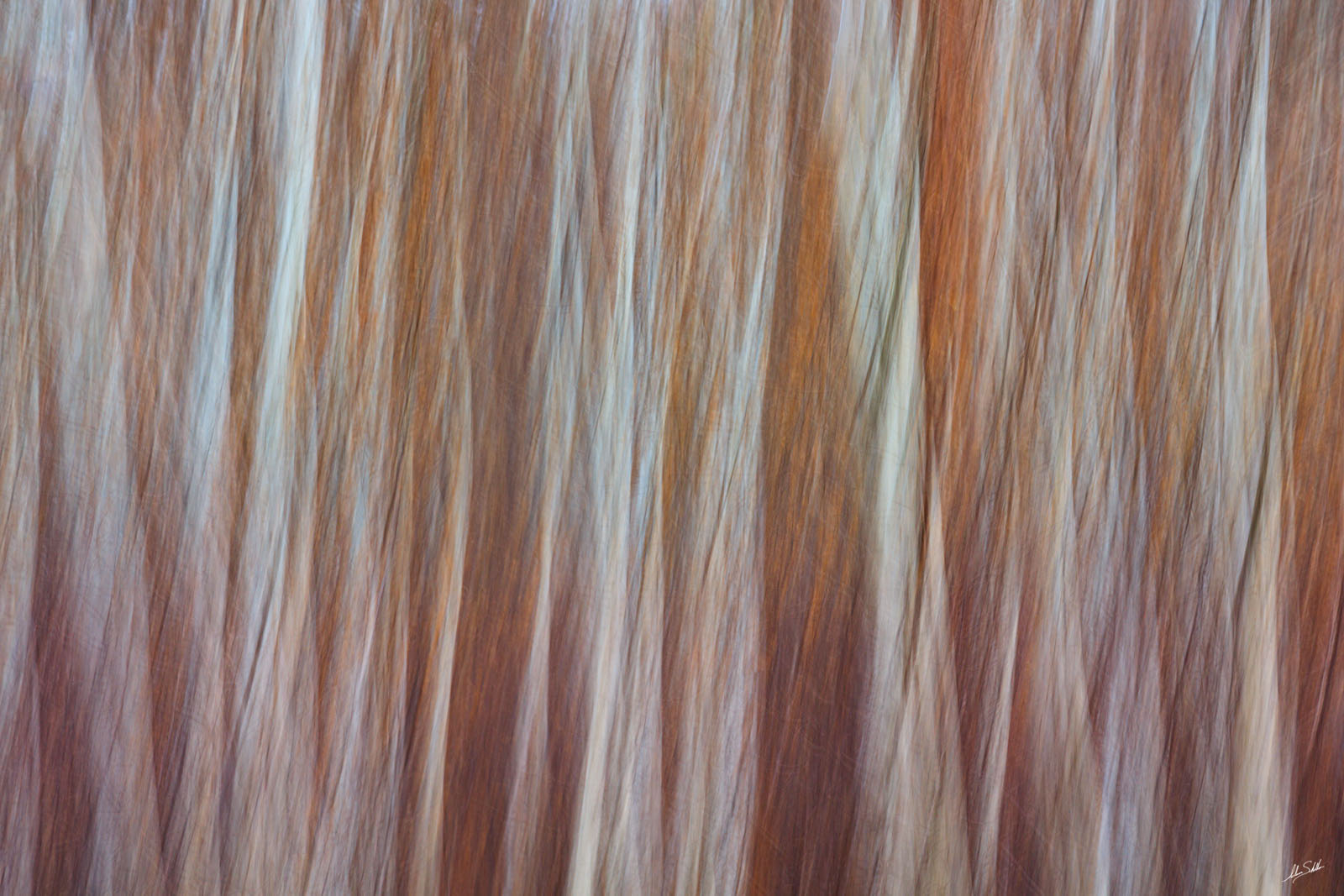 Abstract, Art, Cliff Springs, Forest, Grand Canyon, ICM, Impressionistic, Intentional Camera Movement, North Rim, Pine, Ponderosa, Trees, Walhalla Glades, photo