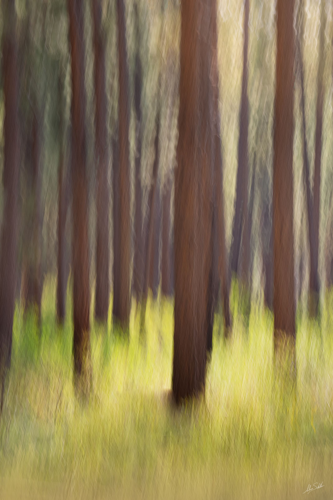 I used a long exposure to create this impressionistic interpretation of the forests of the Point Sublime section on the North...