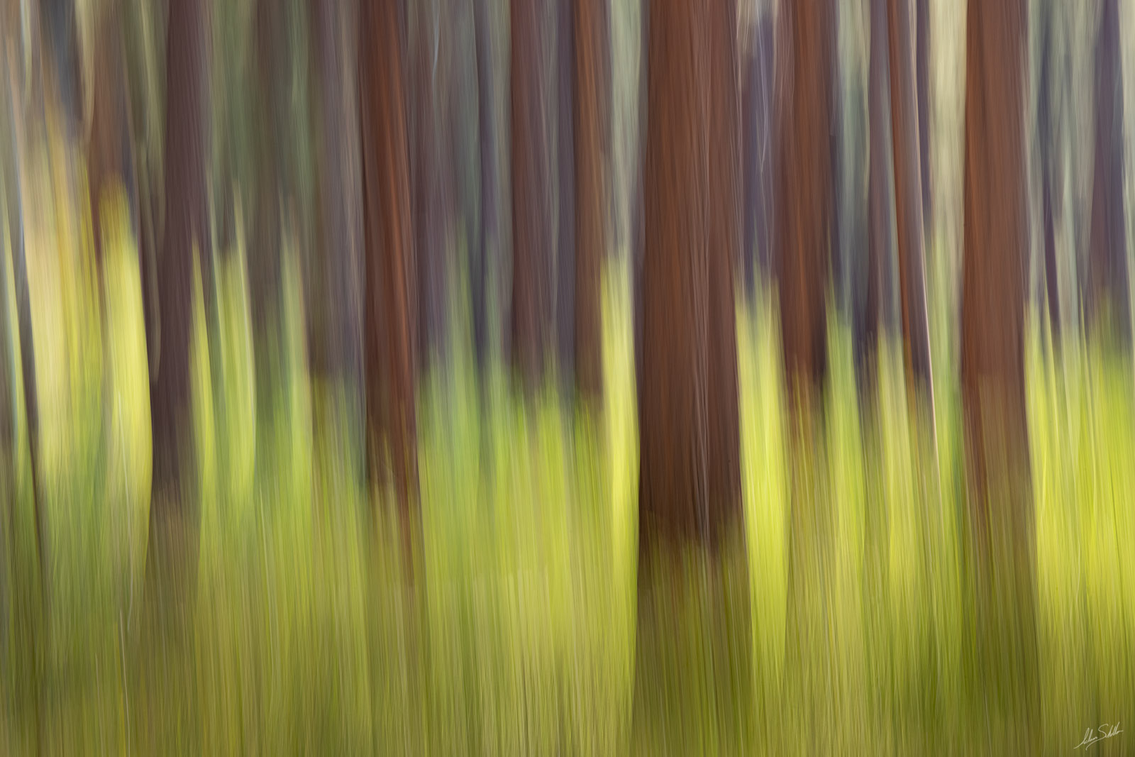 I used a long exposure to create this abstract interpretation of the forests of the Point Sublime section on the North Rim of...